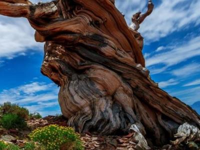 风化木原来是这样形成的