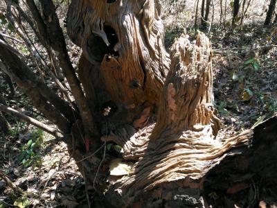 野采風化木