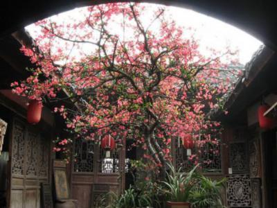 別墅庭院為什么不宜種植大樹