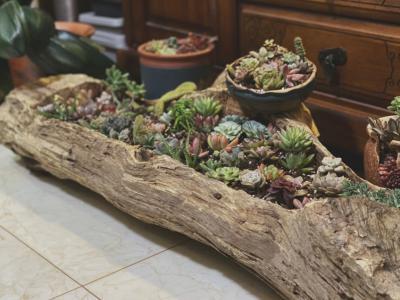 風化木能有哪些用處