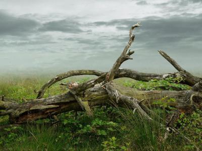 16種風化木材的自然風化行為