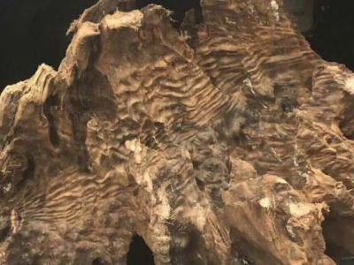 金絲楠陰沉木的種類介紹