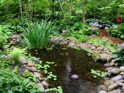 庭院設計中綠色植物搭配方案