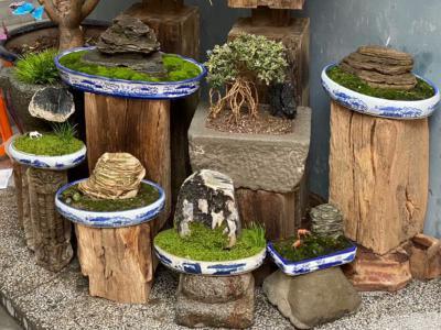 別墅庭院景觀中常見11種風水植物