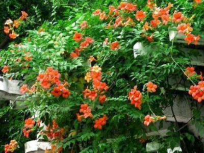花園設計工程施工如何防止綠色植物根莖穿刺