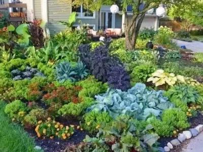 別墅庭院景觀設計方案只求栽菜,帶庭院的房屋如何設計菜園子