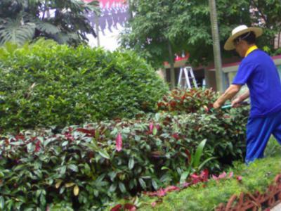 小區園林綠化養護標準