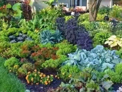 庭院花園植物造景的九大要點