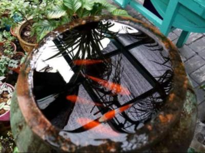 中國人為什么喜歡在院子里放水缸