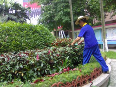 教你如何做好庭院冬季苗木養護